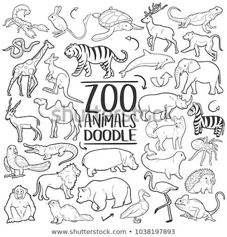 állat · skicc · boldog · majom · illusztráció · természet - stock fotó © colematt