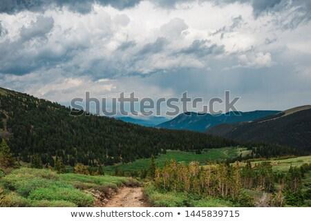 Rocky road among the forest Stock photo © galitskaya