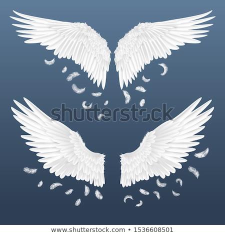 Szárnyak angyali tollak tollazat szett angyalszárnyak Stock fotó © robuart