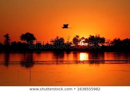 Okavango Delta sunset Stock photo © photoblueice