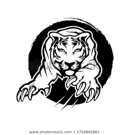 tigris · nagy · gyönyörű · macska · narancs · fekete - stock fotó © chromaco