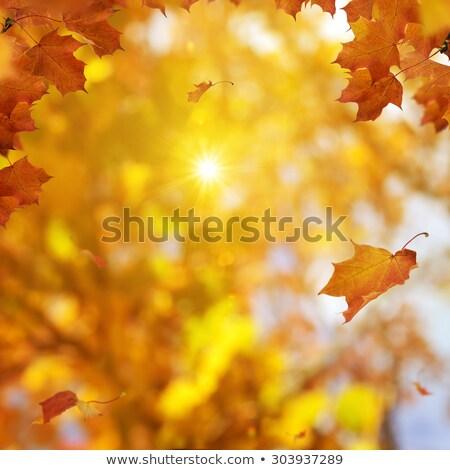 tarde · sol · cair · folhas · tarde - foto stock © jsnover