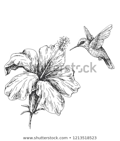 cute · wenig · Vögel · Blumen · Illustration · beige - stock foto © Julietphotography