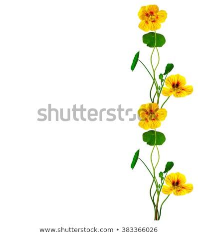 черно · белые · цветами · цветок · фон · черный · графических - Сток-фото © tanais
