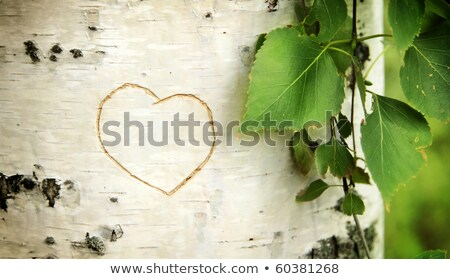 a carved love heart on a birch tree stock photo © pashabo
