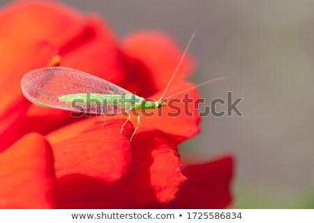 Yeşil yaprak doğa uçmak Stok fotoğraf © chris2766