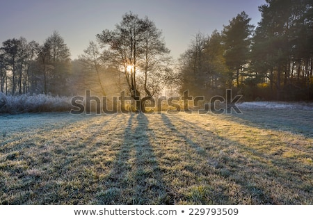 Cold and frosty morning Stock photo © chris2766