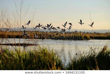 カモ · 女性 · 湖岸 · 緑 · 湖 - ストックフォト © srnr