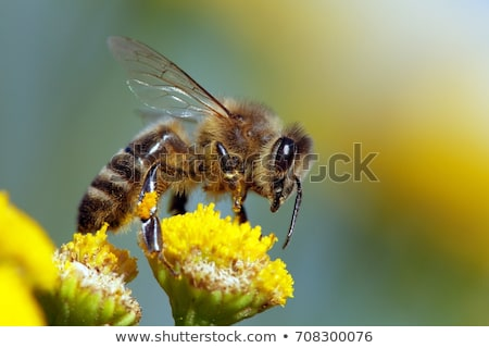 пчела деревянный стол глаза древесины оранжевый желтый Сток-фото © mobi68