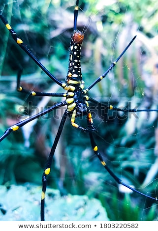 Tropical spider - nephila in the web Stock photo © pzaxe
