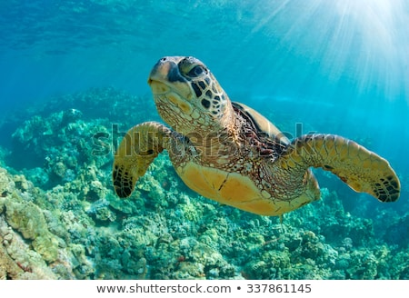 Vert mer tortue Hawaii up Photo stock © kraskoff