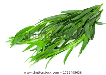 Spice geïsoleerd witte gras blad gezondheid Stockfoto © natika