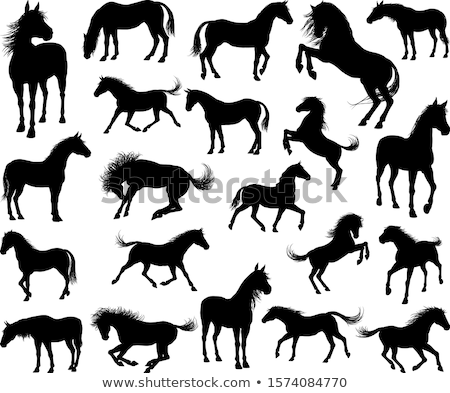 horse silhouette in show horse position stock photo © istanbul2009