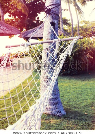 Lounge chairs in a lawn, Jamaica Stock photo © bmonteny