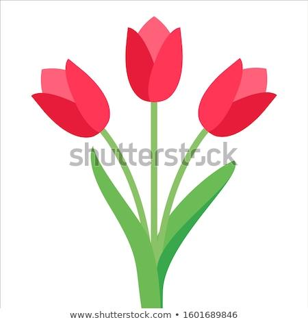 весенние · цветы · три · красивой · тюльпаны · саду · цветок - Сток-фото © dash