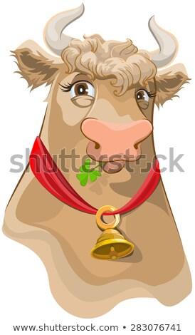 Marrom cabeça sino vaca mastigar trevo Foto stock © orensila