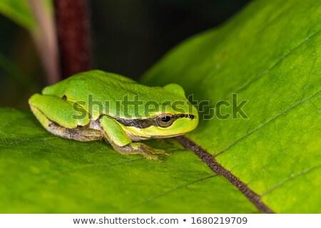Frog body Stock photo © badmanproduction