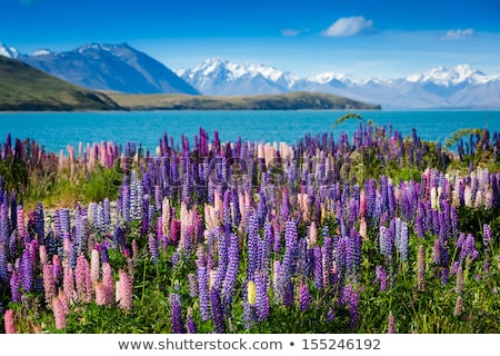 fields of flowers in the mountains stock photo © kotenko