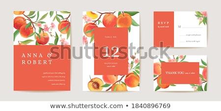 Pêssego fruto ilustração inteiro laranja Foto stock © Morphart