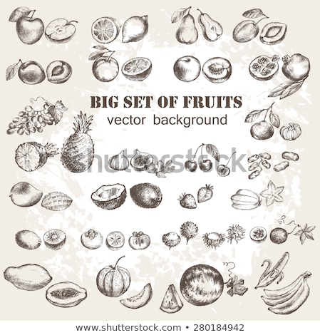 plums in vintage style line art vector illustration stock photo © conceptcafe