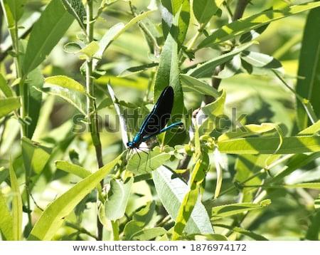 penge · fű · tavasz · zöld · szín · légy - stock fotó © kayros