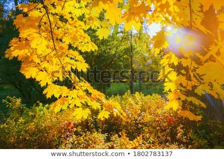 высушите землю Осенний сезон расплывчатый парка Сток-фото © stevanovicigor