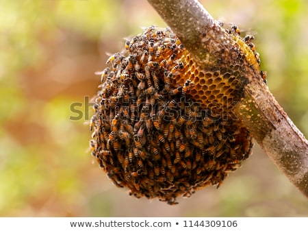 Bees and beehive on the tree Stock photo © bluering
