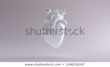 human heart detailed anatomy colorful design stock photo © tefi