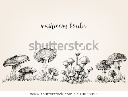 Vectorized Ink Sketch of a Mushroom Stock photo © cidepix