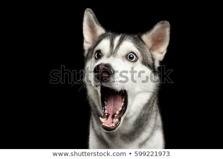 Single dog Stock photo © Novic