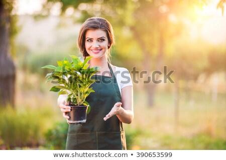 virágcserép · ikon · zöld · virág · szürke · edény - stock fotó © orensila