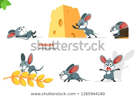 Gris rata diferente pelo cabeza blanco Foto stock © OleksandrO