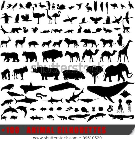 rhino icon silhouette design wild animal symbol and element isolated on white background vintage h stock photo © jeksongraphics