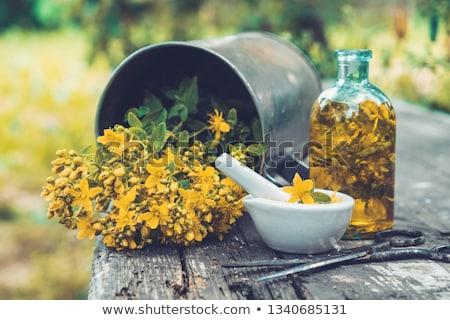 Primer plano flor plantas hierba antidepresivo Foto stock © adamr