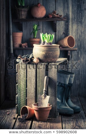 Gardening tools, young seedlings, crocus flower. spring Stock photo © Illia
