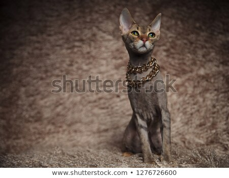 lovely whiskas cat wearing gloden collar looks up to side Stock photo © feedough