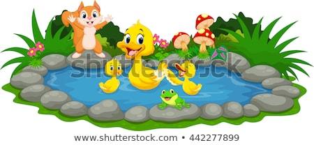 Duck family at farmland Stock photo © colematt