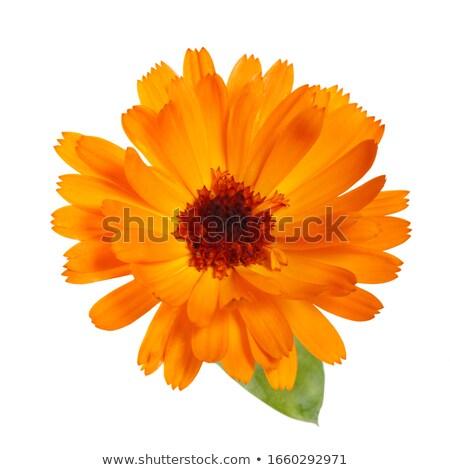 Brilhante amarelo flor luxuriante verde Foto stock © sarahdoow