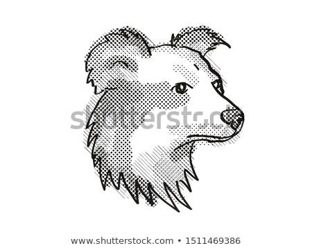 Stockfoto: Shetland Sheepdog Dog Breed Cartoon Retro Drawing