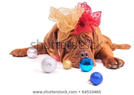 Woman with a big dog in the new year's eve on the background of the room with a Christmas tree Stock photo © ElenaBatkova