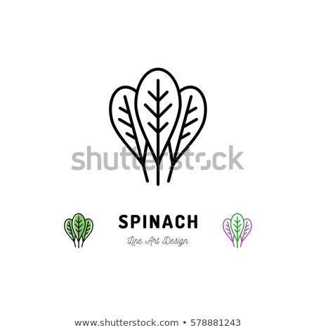Spenót levelek ikon vektor skicc illusztráció Stock fotó © pikepicture