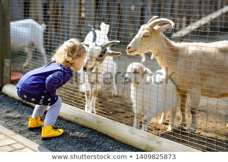 Küçük keçi çiftlik yüz yaz Stok fotoğraf © olira