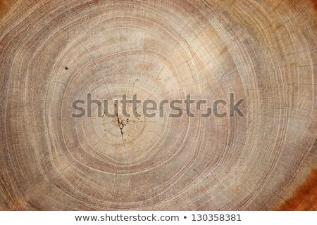 Stock macro photo of the texture of wood Stock photo © ilolab