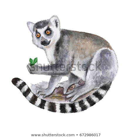 Cartoon Character Lemur Stock photo © RAStudio