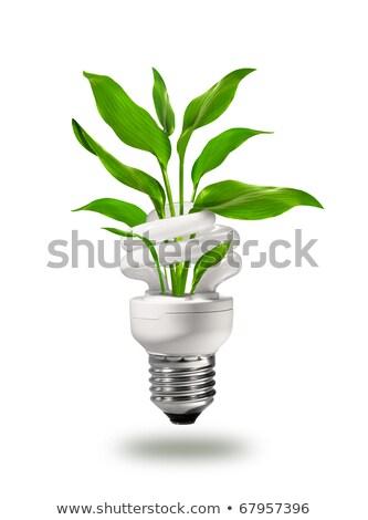 Lampe · Baum · neue · zunehmend - stock foto © hasloo