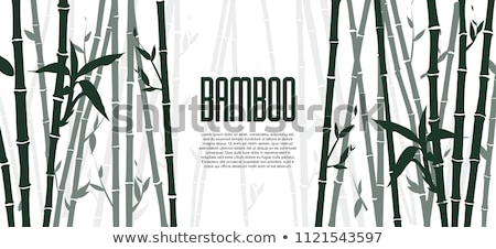 beautiful japanese bamboo background stock photo © shutswis