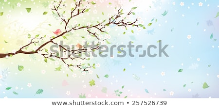 Spring sacura banner, vector illustration Stock photo © carodi