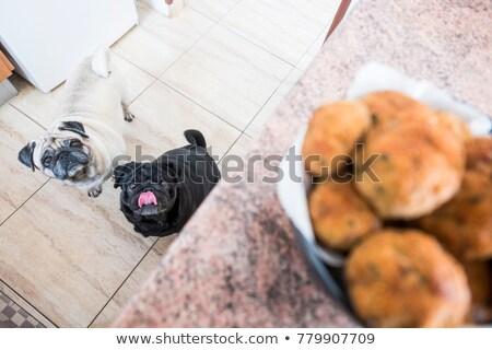 perro · lupa · feliz · arte · retrato · Cartoon - foto stock © karelin721