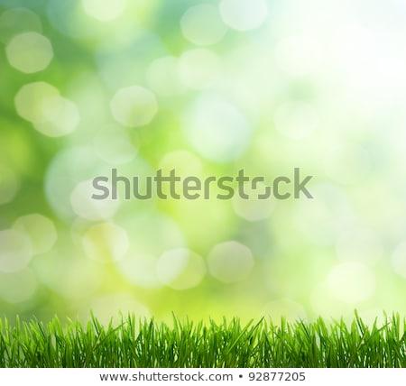 Fresh green grass, selective foucs Stock photo © leungchopan