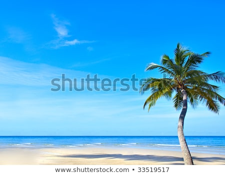 single green palmtree on blue sky background Stock photo © juniart